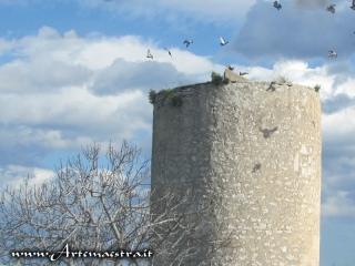 Bisceglie - Torre Longa
