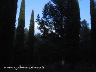 Cassano - Foresta di Mercadante